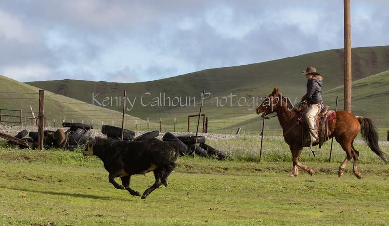 Mark Elworthy Ranch-8076