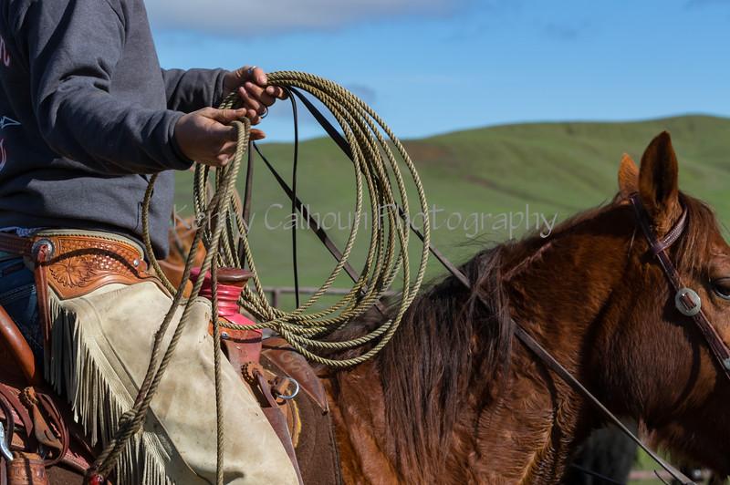 Mark Elworthy Ranch-8850
