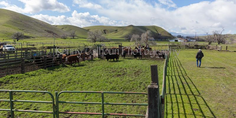 Mark Elworthy Ranch-9753