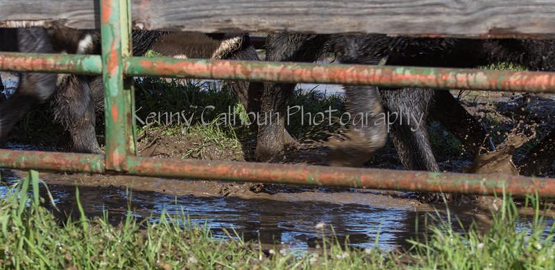 Mark Elworthy Ranch-8616