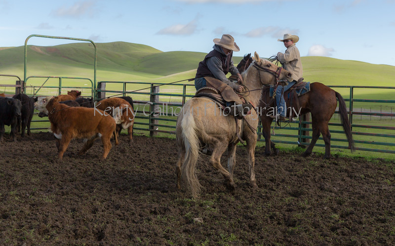 Mark Elworthy Ranch-8843