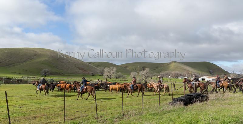 Mark Elworthy Ranch-8061