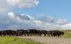 Mark Elworthy Ranch-9851