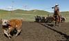 Mark Elworthy Ranch-9487