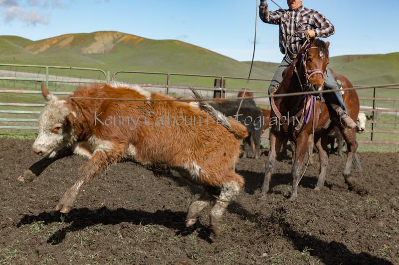 Mark Elworthy Ranch-9484