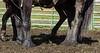 Mark Elworthy Ranch-9288