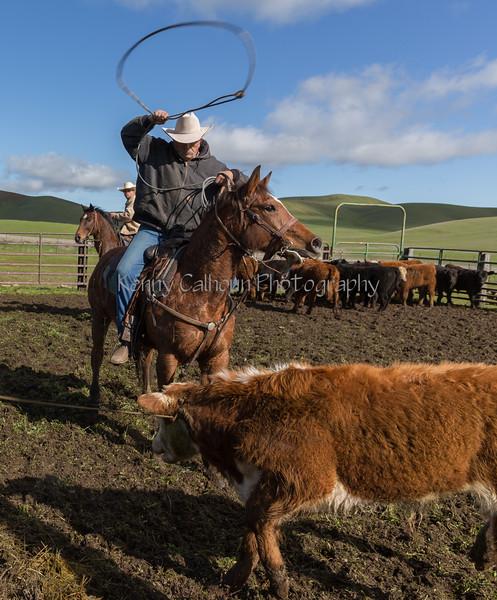 Mark Elworthy Ranch-8745