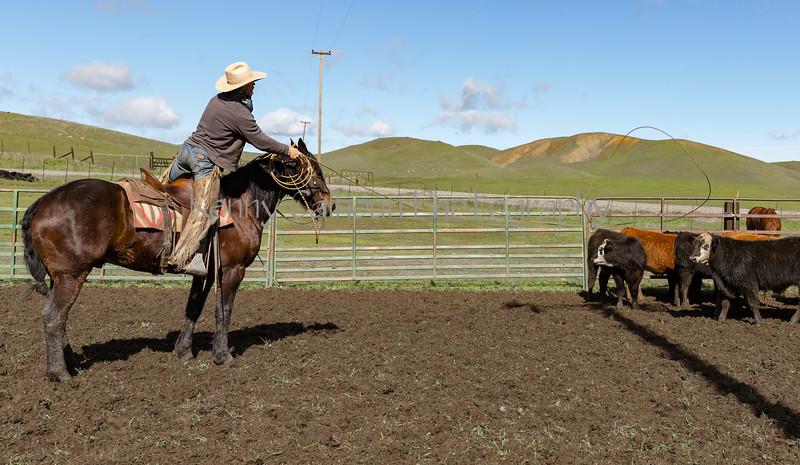 Mark Elworthy Ranch-9474