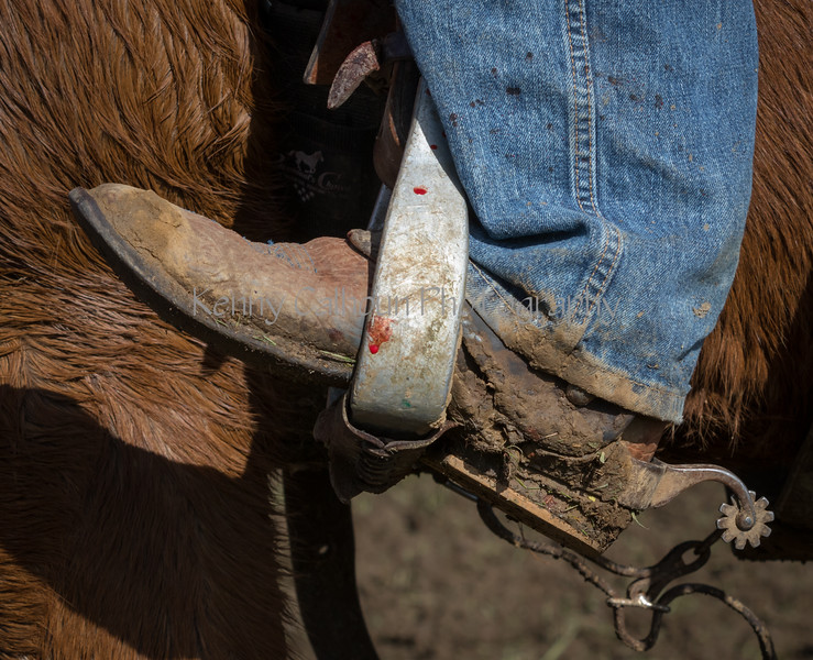 Mark Elworthy Ranch-9003
