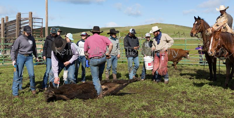 Mark Elworthy Ranch-8633