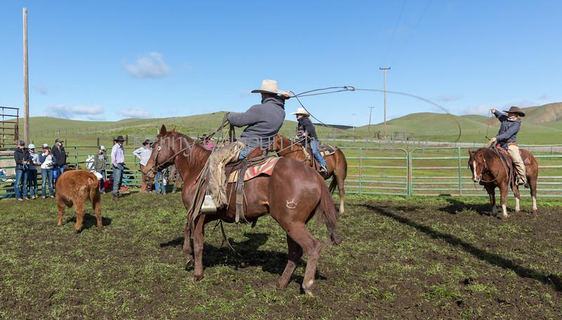 Mark Elworthy Ranch-8900