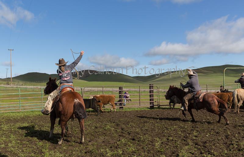 Mark Elworthy Ranch-8706