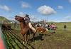 Mark Elworthy Ranch-8733