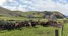Mark Elworthy Ranch-9759