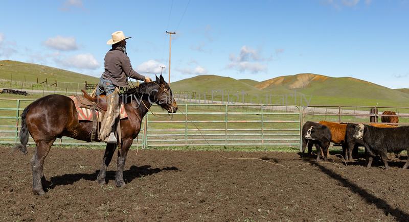 Mark Elworthy Ranch-9476