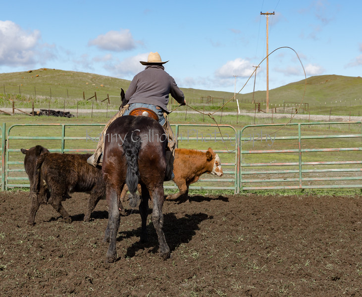 Mark Elworthy Ranch-9462