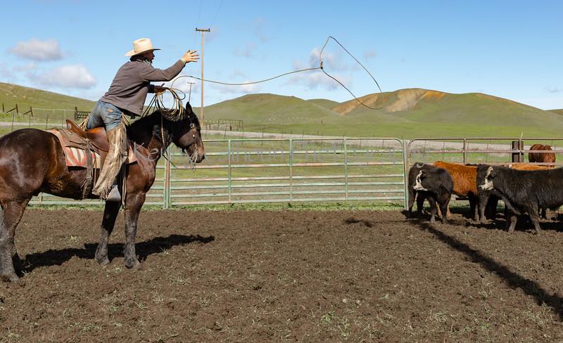 Mark Elworthy Ranch-9470