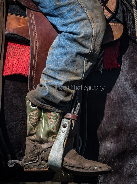 Mark Elworthy Ranch-9390