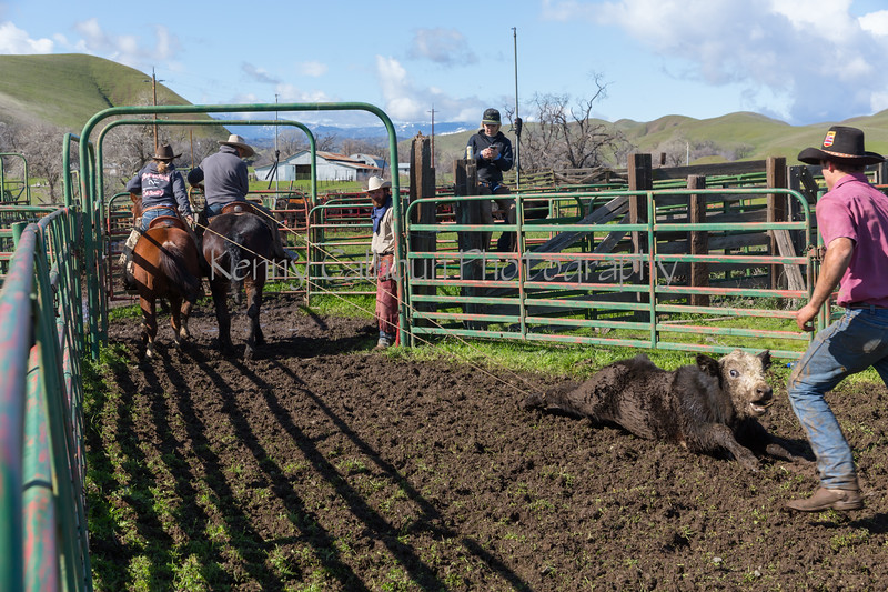 Mark Elworthy Ranch-9274