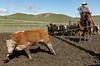 Mark Elworthy Ranch-9486