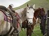 Mark Elworthy Ranch-7764