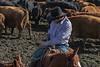 Mark Elworthy Ranch-9587