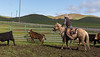 Mark Elworthy Ranch-8775