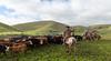 Mark Elworthy Ranch-8245