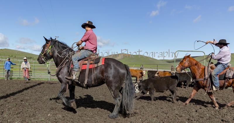 Mark Elworthy Ranch-9533
