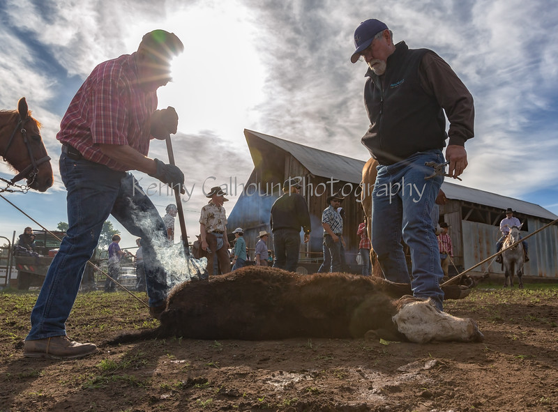 3-25-16 Petes Valley_N5A5123-Edit-Edit