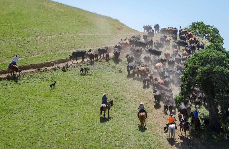 4-29 Pacific Livestock951A1500