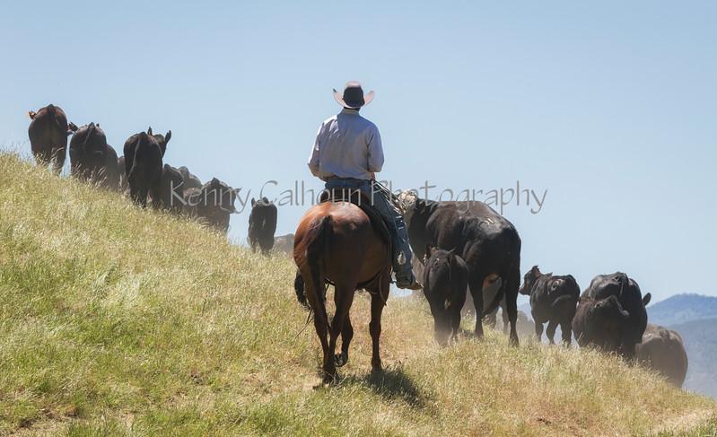 4-29 Pacific Livestock951A1461-Edit