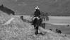 4-29 Pacific Livestock951A1467-Edit-Edit