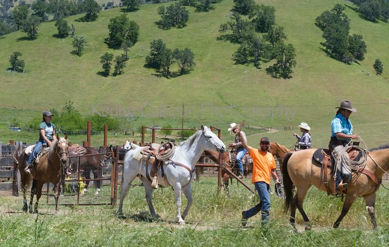 4-29 Pacific Livestock951A1641