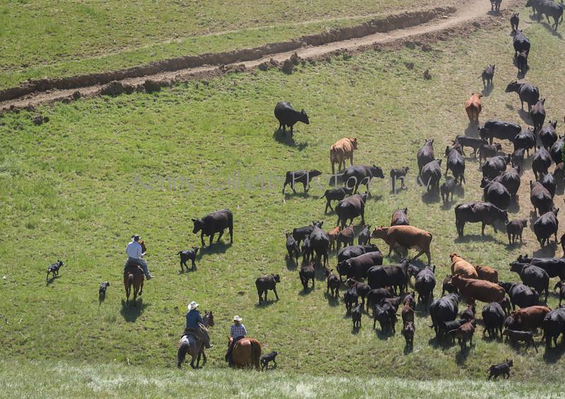 4-29 Pacific Livestock951A1491