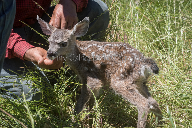 4-29 Pacific Livestock951A1616
