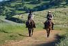 4-29 Pacific Livestock951A9760
