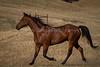 Yolo Land & Cattle 5-18-13IMG_6648