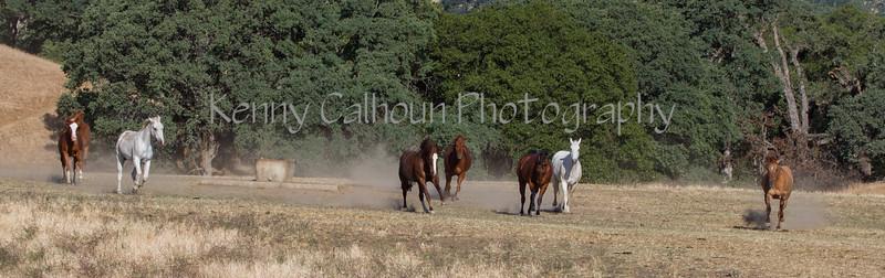 Yolo Land & Cattle 5-18-13IMG_6622