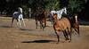 Yolo Land & Cattle 5-18-13IMG_6638