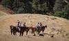 Yolo Land & Cattle 5-18-13IMG_6724