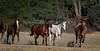 Yolo Land & Cattle 5-18-13IMG_6625-Edit