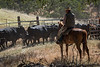 YL&C Bobcat Ranch 5-19-2018-7024