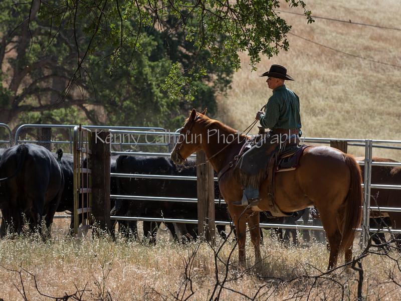 YL&C Bobcat Ranch 5-19-2018-7015