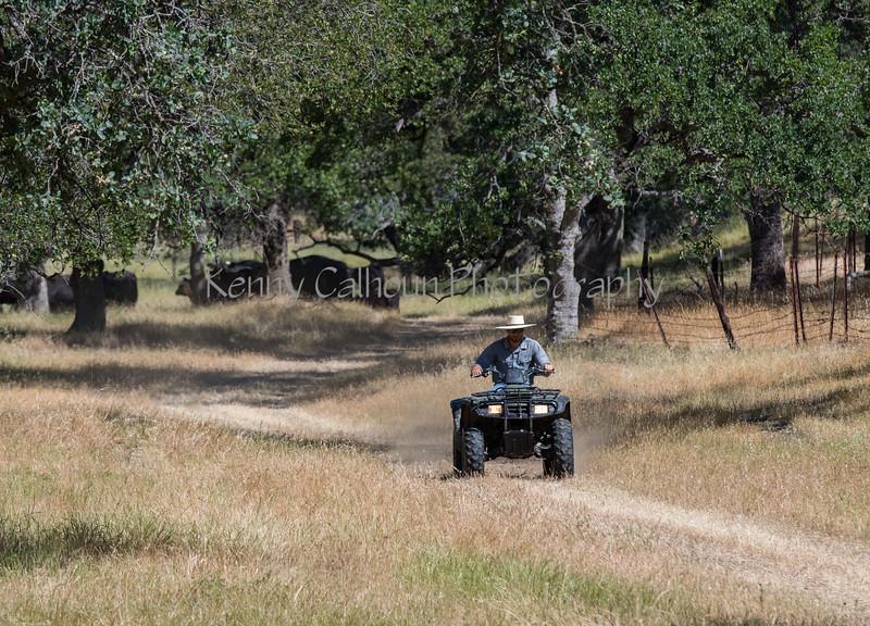 YL&C Bobcat Ranch 5-19-2018-6876