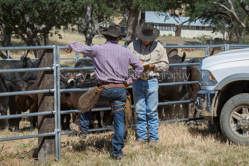 YL&C Bobcat Ranch 5-19-2018-7227