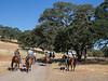 YL&C Bobcat Ranch 5-19-2018-7348