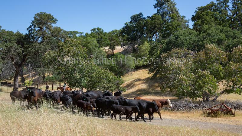 YL&C Bobcat Ranch 5-19-2018-7438