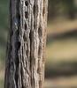 YL&C Bobcat Ranch 5-19-2018-6836