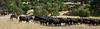 YL&C Bobcat Ranch 5-19-2018-7459